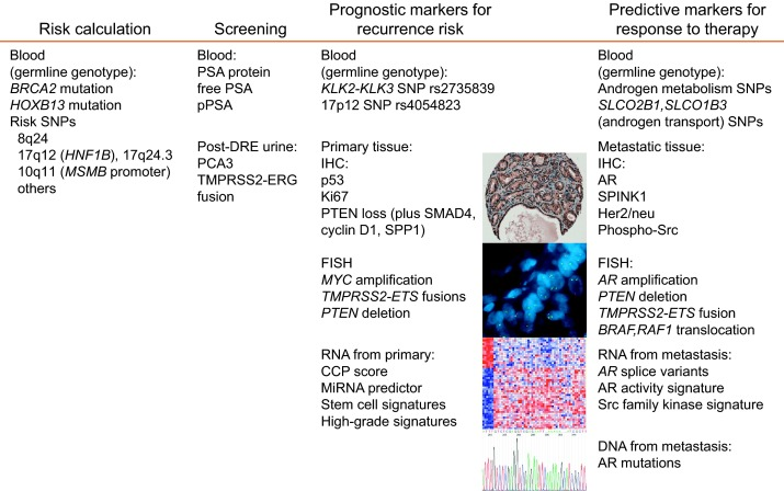 cancer genetic markers)