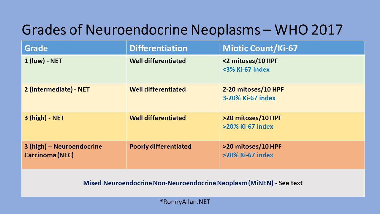 neuroendocrine cancer ki67)