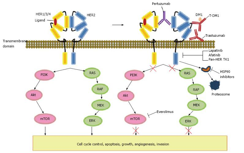 gastric cancer targeted therapy