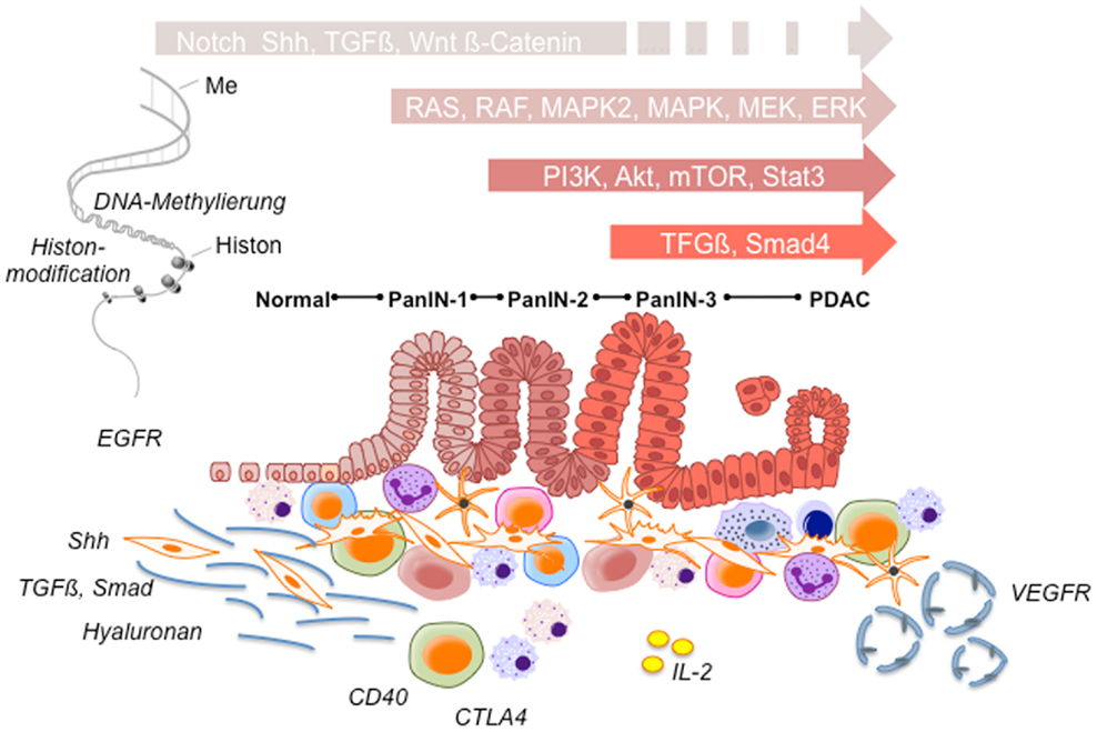 Pancreatic cancer targeted therapy, Papillon zeugma convention centre