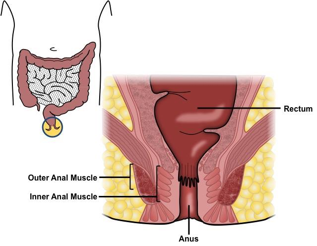 Does hpv cause womb cancer - Rectal cancer of the liver
