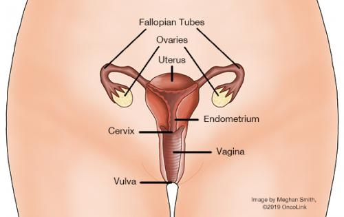 Hpv treatment in pregnancy
