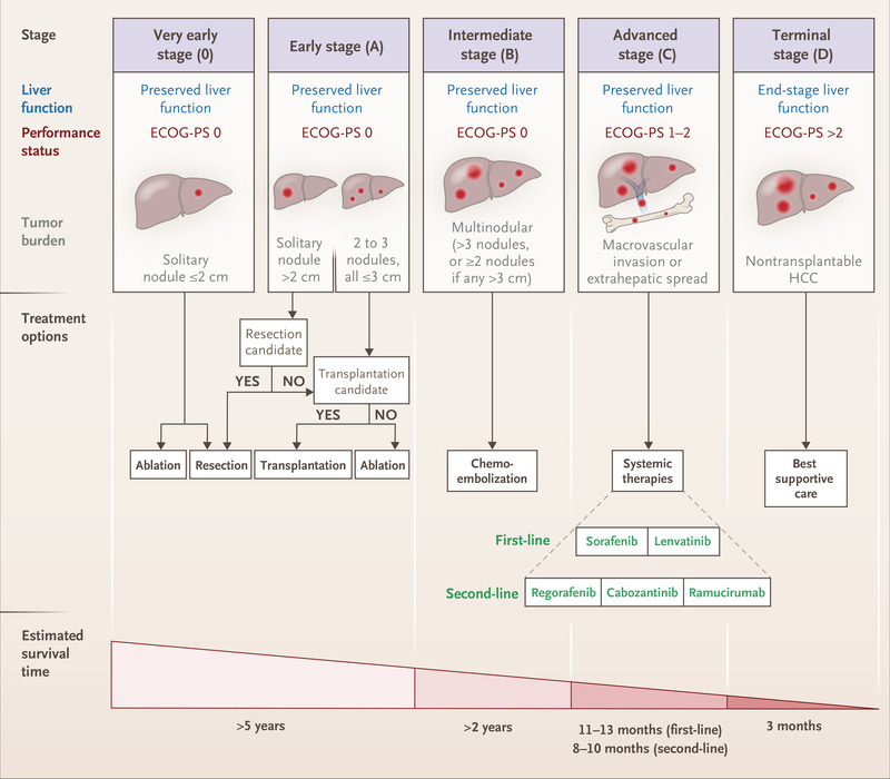 hepatic cancer review)