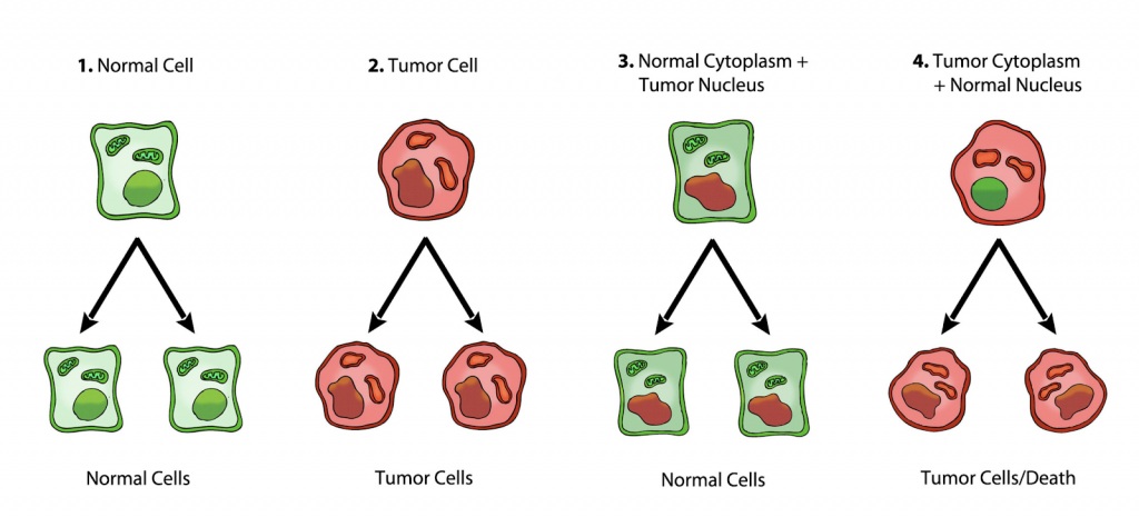 is cancer genetic or metabolic