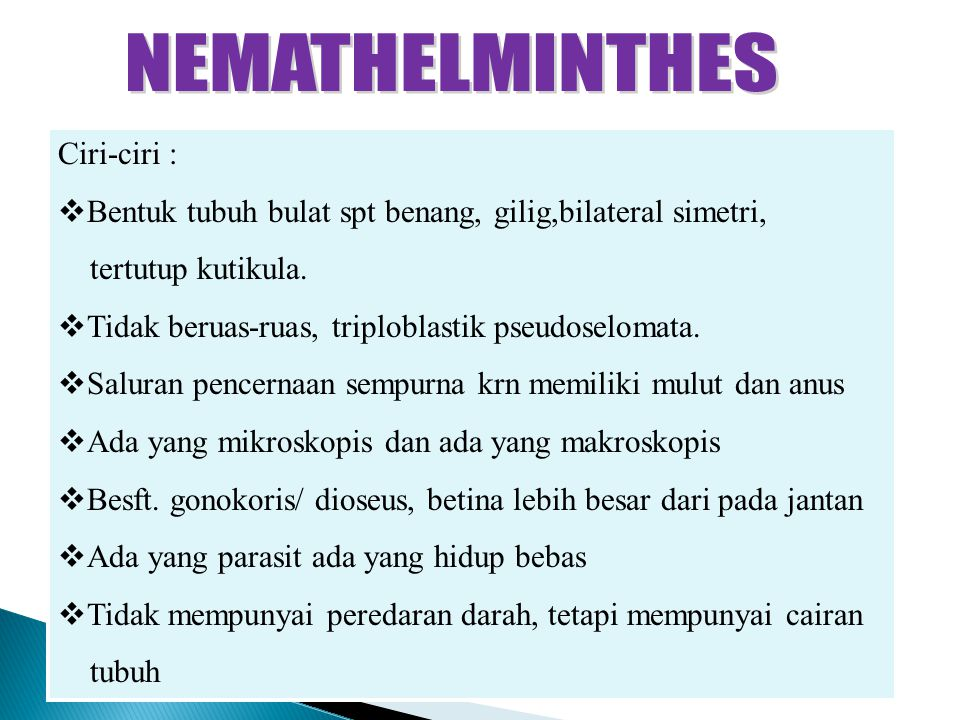 nemathelminthes cacing ppt)