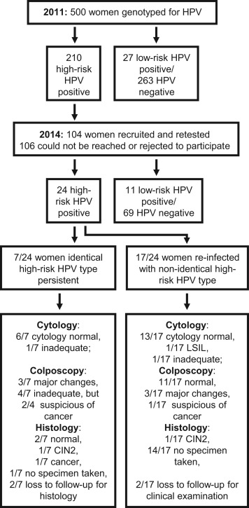 hpv high risk infection)