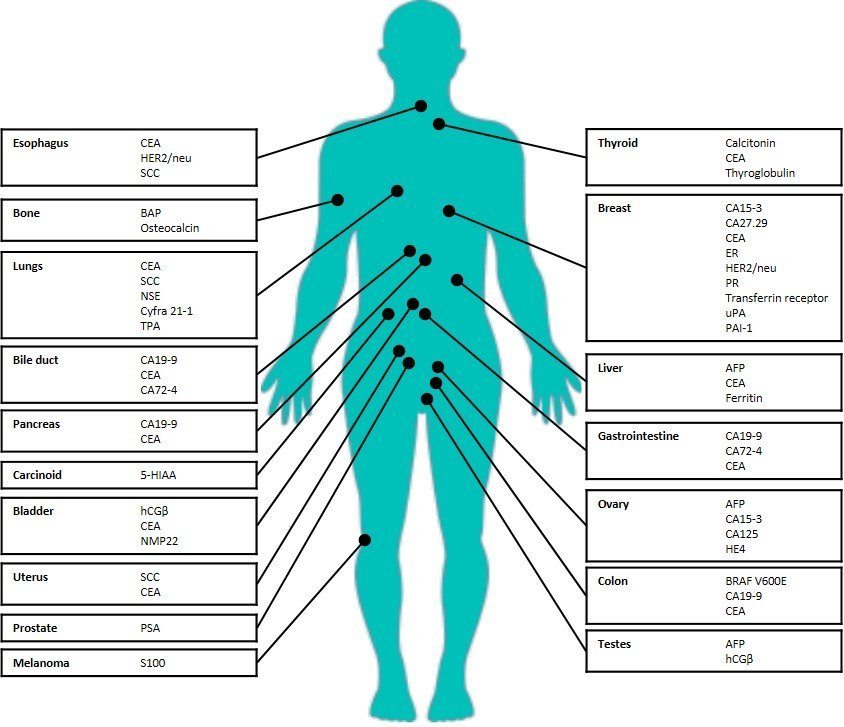 Cancer genetic markers. EndoPredict – Nucleoshealthcare