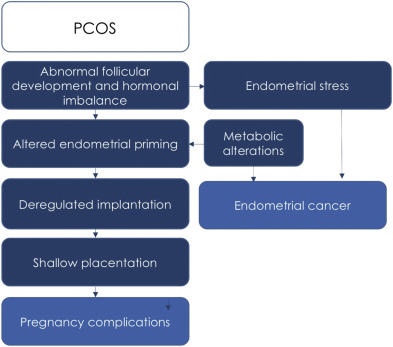 endometrial cancer in pcos