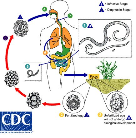 prevention of helminth diseases requires)