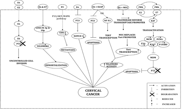 hpv cancer pathogenesis