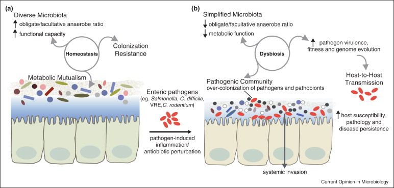 dysbiosis of the microbiome)