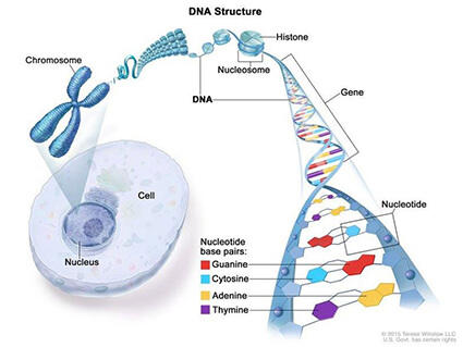 cancer and genetic)
