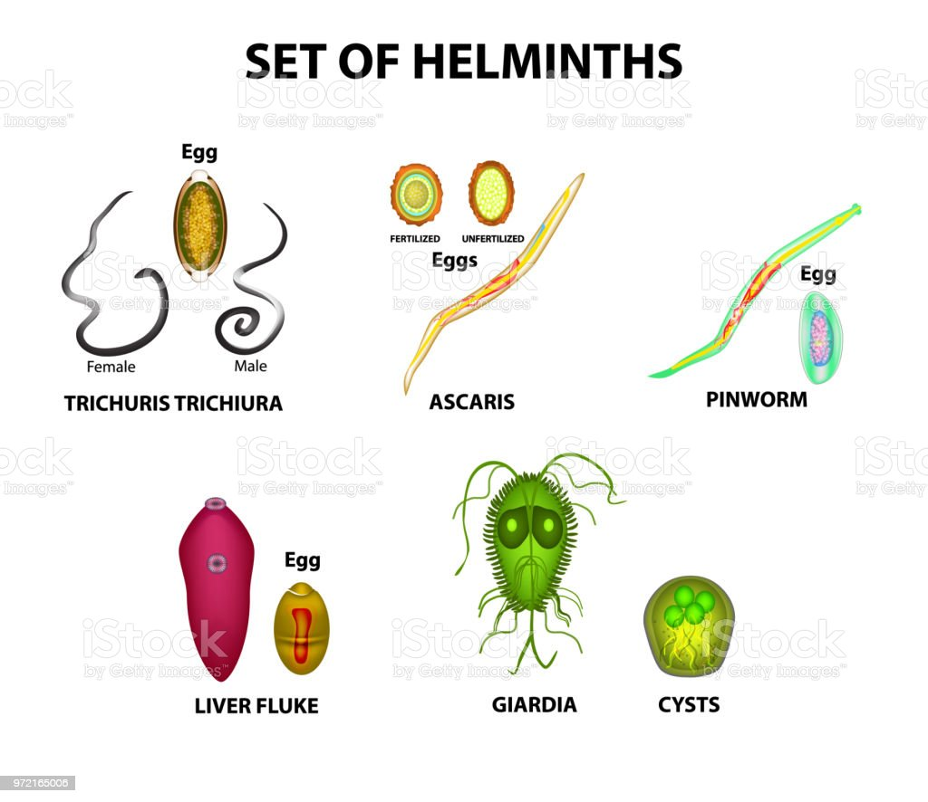 Helminth infection worms. Foot wart treatment over the counter