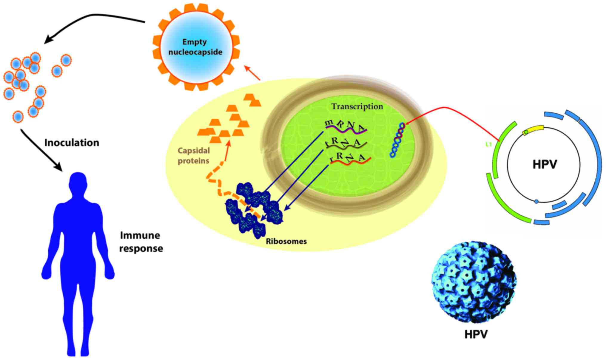 hpv virus review
