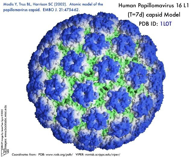 hpv virus is present