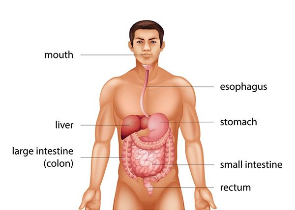 rectal cancer in colon)