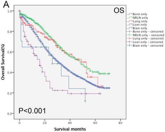 metastatic cancer bone survival rate