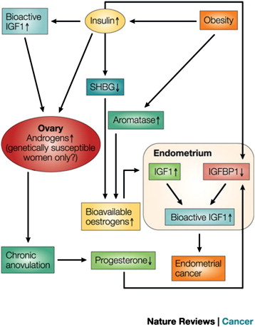 endometrial cancer obesity