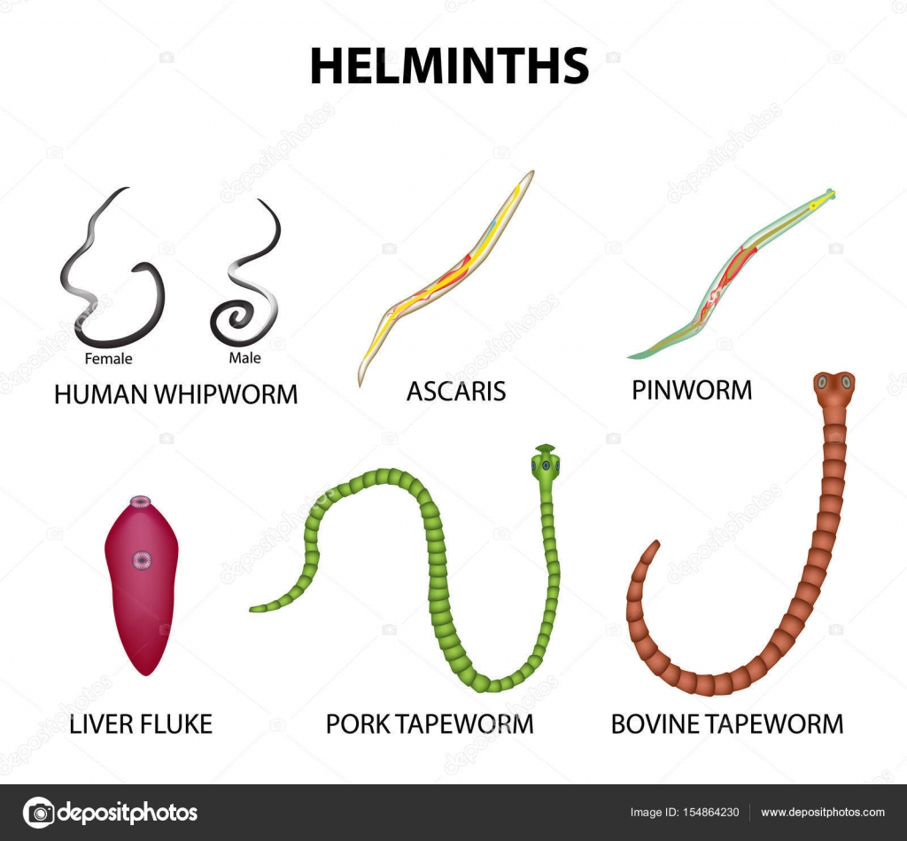 helminth and worms)