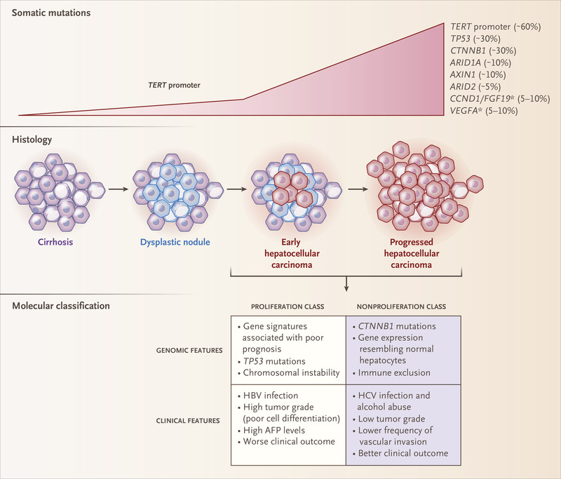 hepatic cancer review