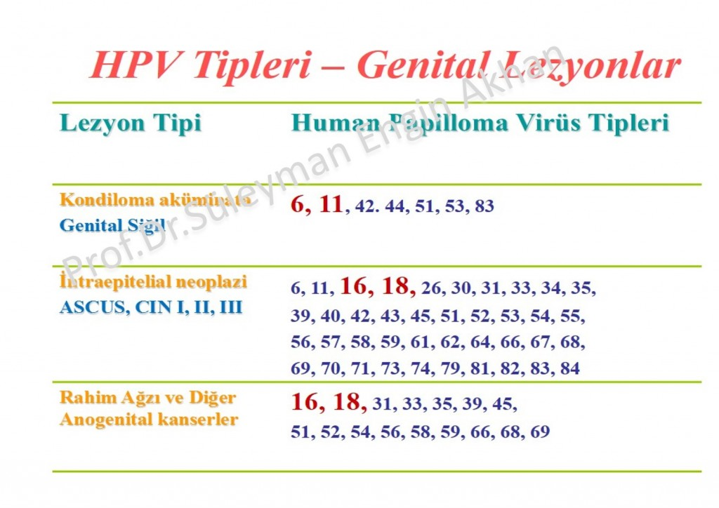Hpv type that causes genital warts Traducere