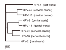 hpv that causes cancer and warts)