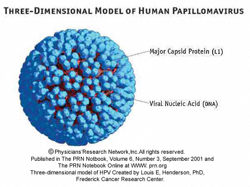 Human papillomavirus prevention and treatment - Sarcoma cancer face