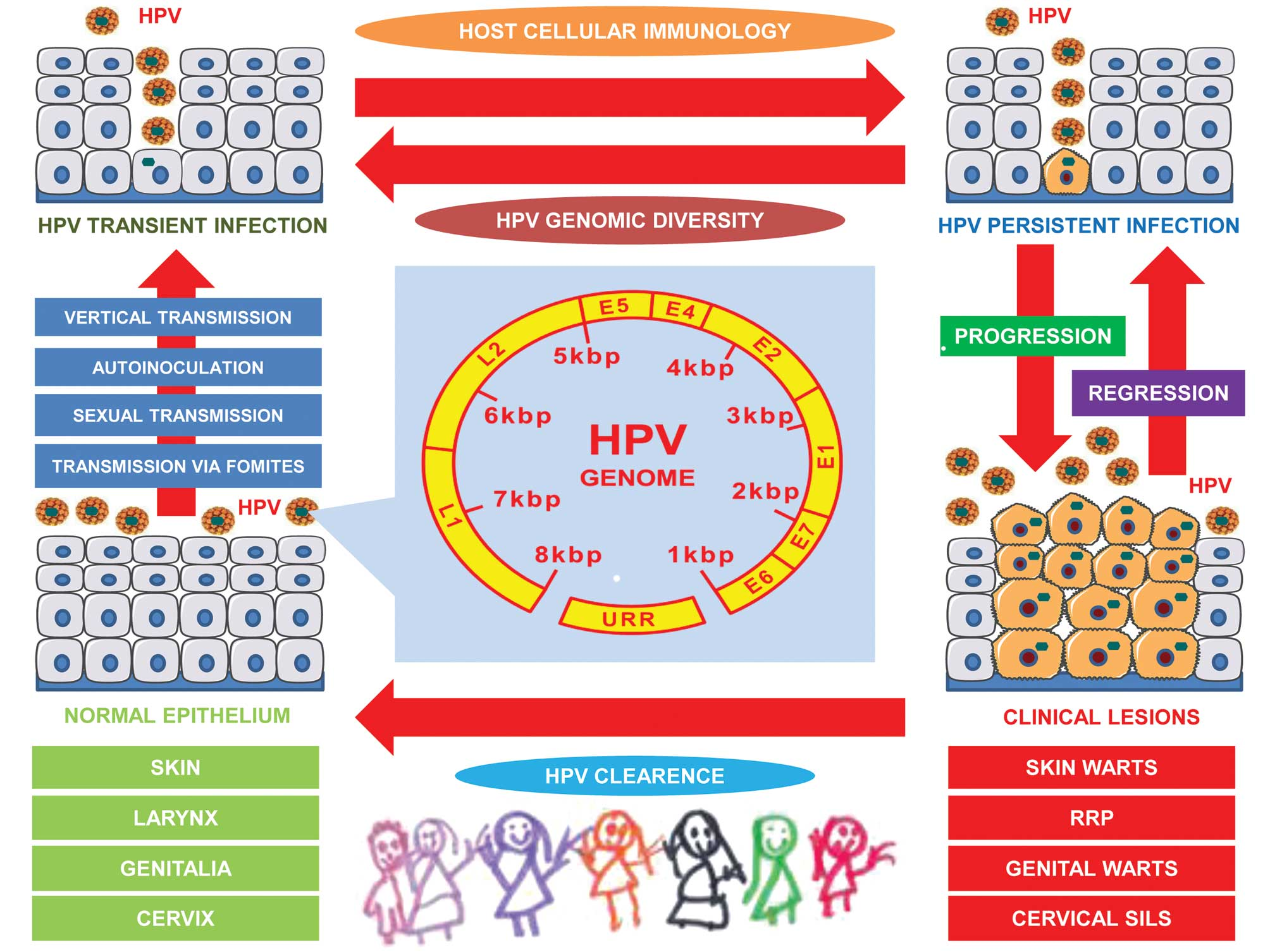 Mode de transmission du papillomavirus. Uploaded by