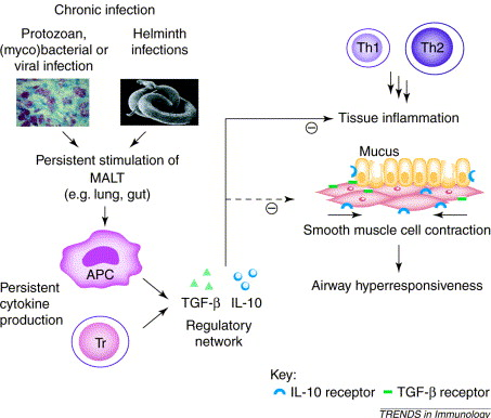 helminth infections atopy)