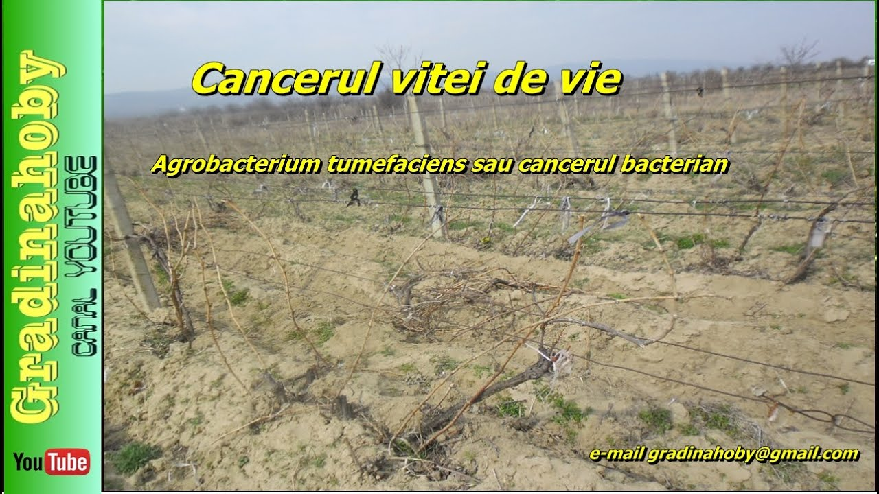 cancerul bacterian la pomi
