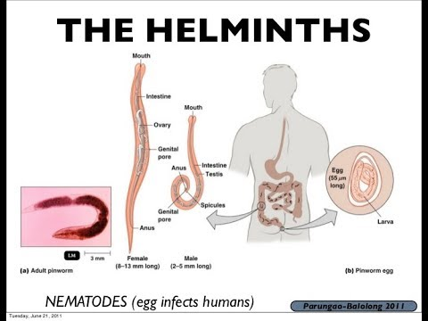 What does helminth mean