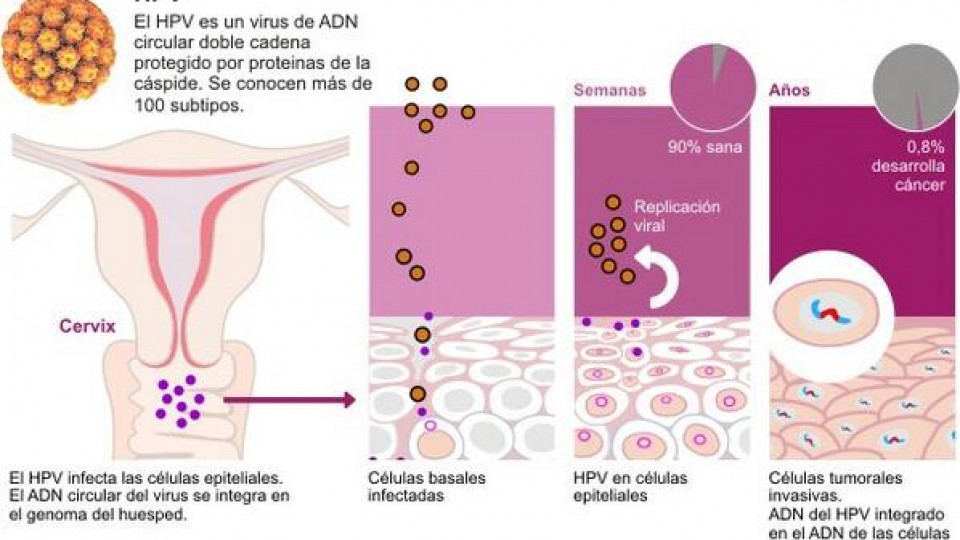 hpv virus latente)