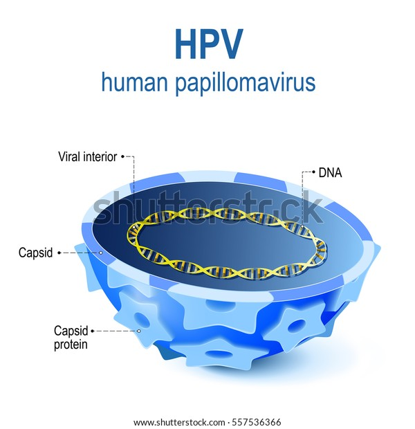 human papillomavirus dna or rna