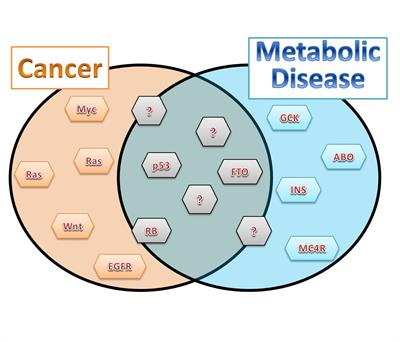 Cancer: The Metabolic Disease Unravelled, Paperback