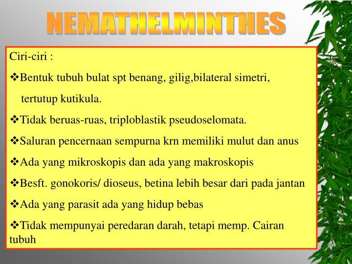 nemathelminthes cacing ppt