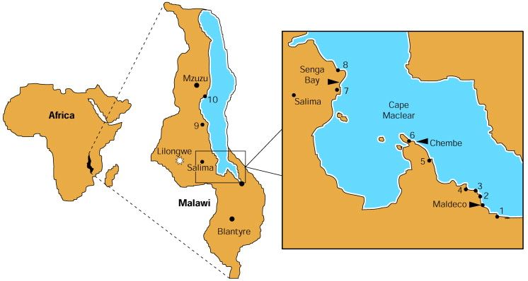 Schistosomiasis lake malawi - Xiuang! eng2ro.ro SWS://eng2ro.rotant/Germany-Berlin