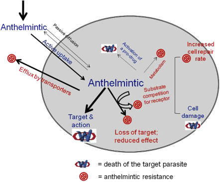 anthelmintic mechanism of action)