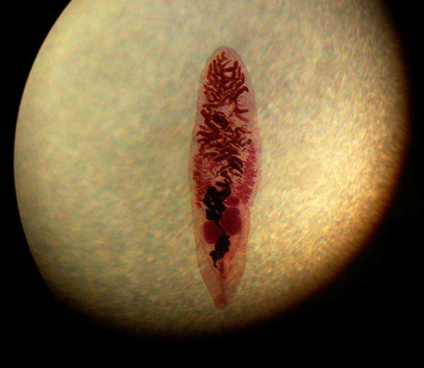 hpv male removal
