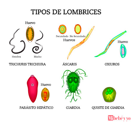 lombrices de oxiuros)