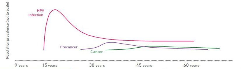 Hpv high risk cancer cells.