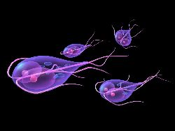 giardia simptome meaning of helminths in marathi