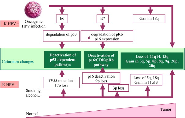 hpv virus in head and neck cancer)