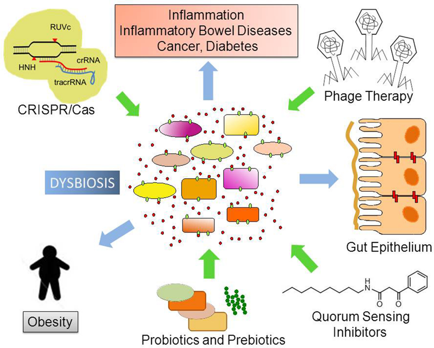 dysbiosis of the microbiome