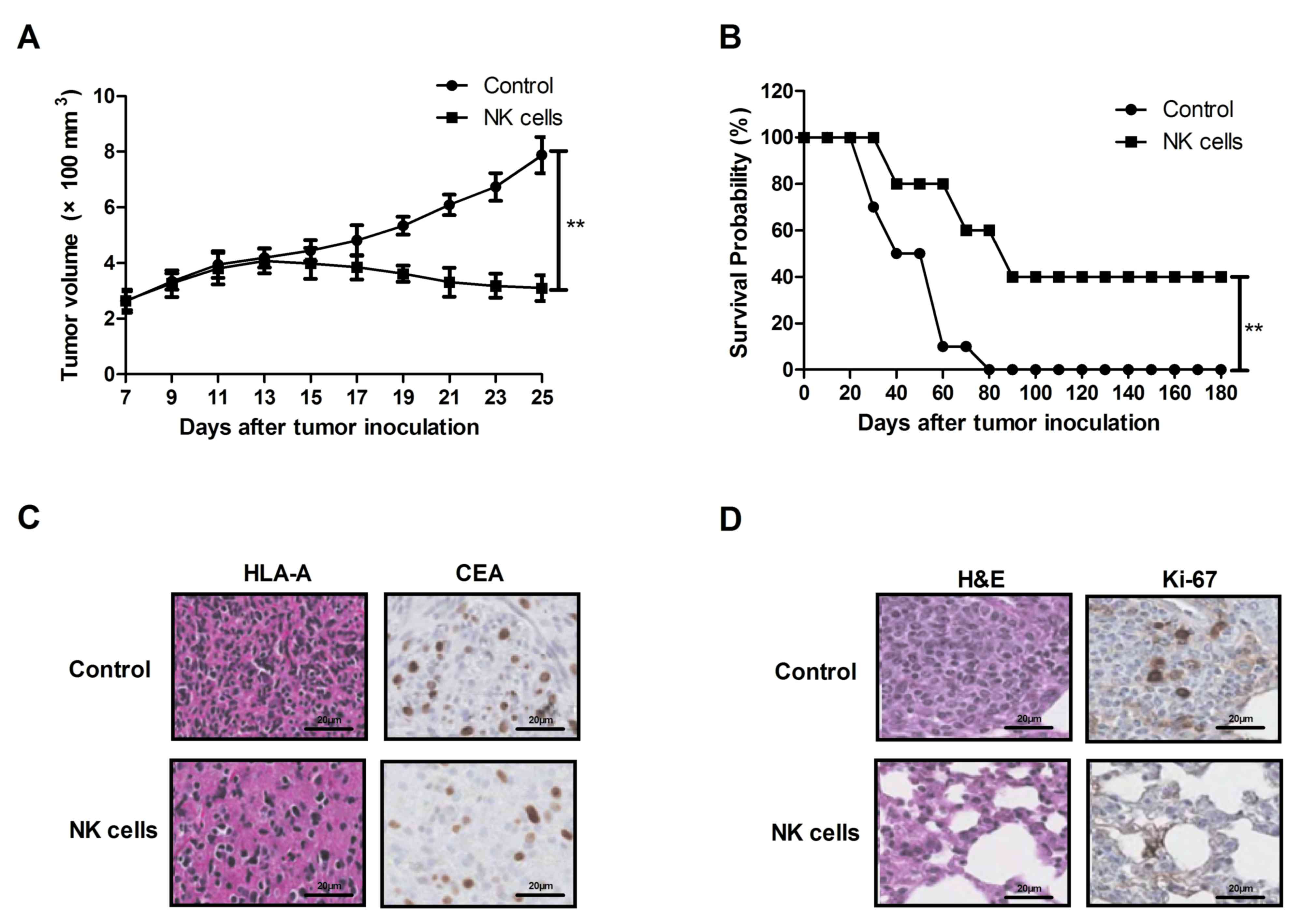 ovarian cancer xenograft mouse model